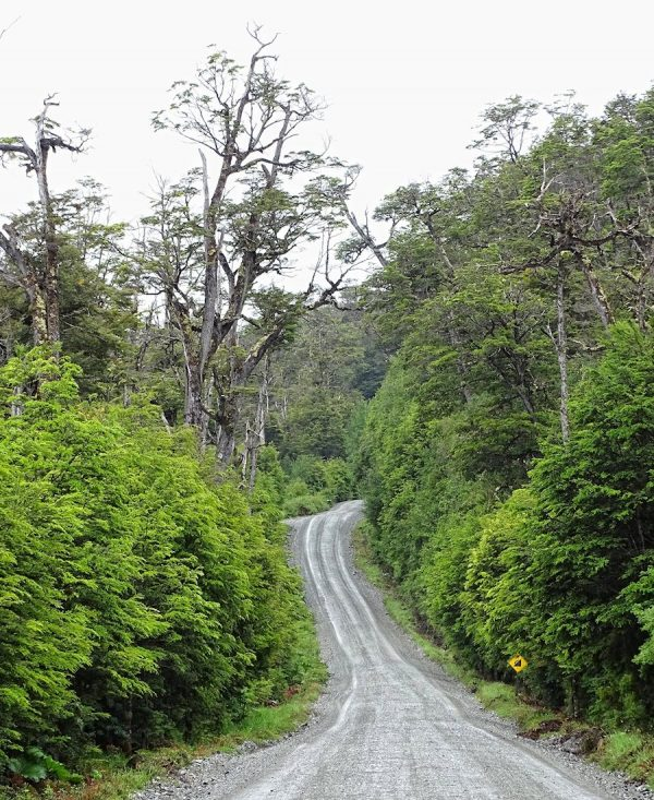Dense, jungle-like forest surrounding Carretera Austral.