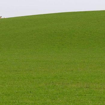 Ireland is green. Happy sheep.