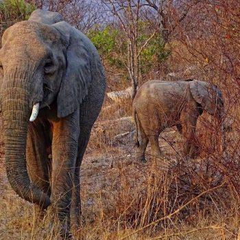 Small elephant family.