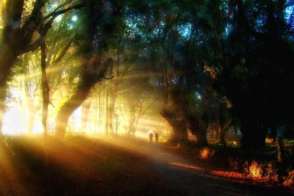 Early morning on the Camino de Santiago.