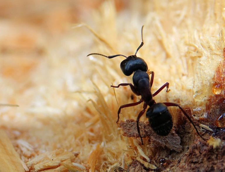 Ants are awesome.