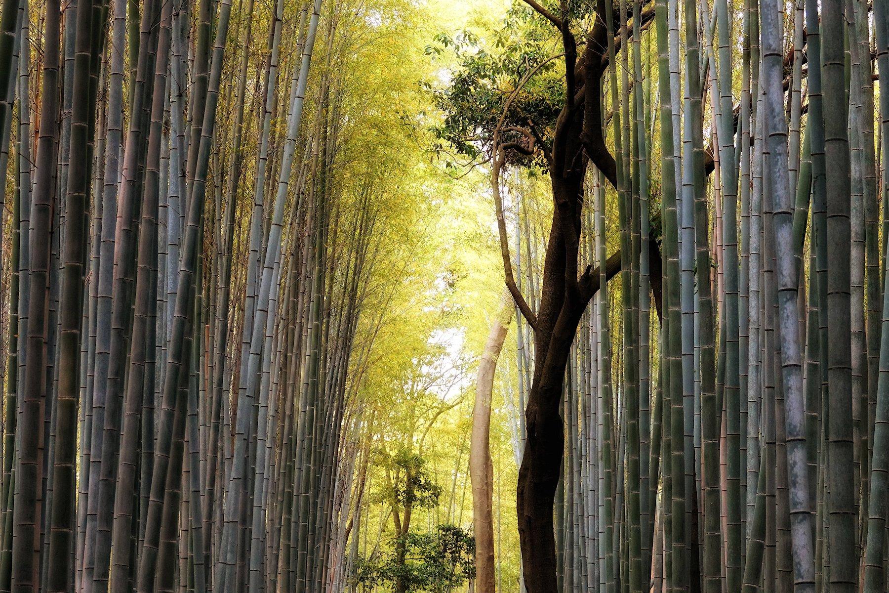Quickly Kyoto