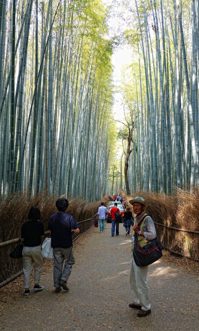 Tourism hell in Arashiyama Bamboo Grove.