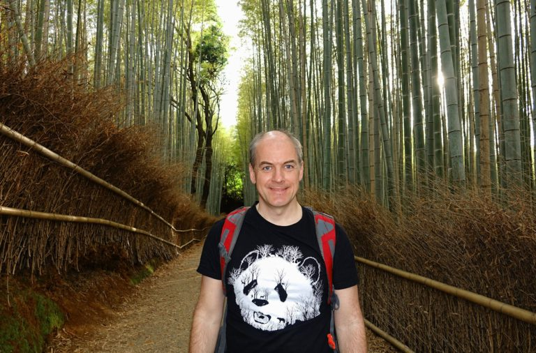 Panda in bamboo forest.