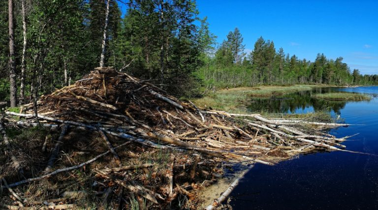 Dams are still being built in the forests of Romedalen.