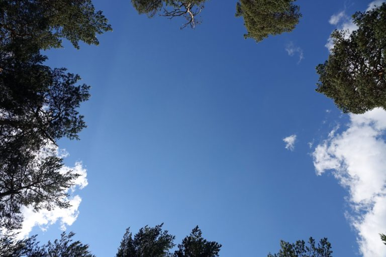 Sometimes you just want to lie down and look up at the sky, dreading the moment you have to put your backpack on again.