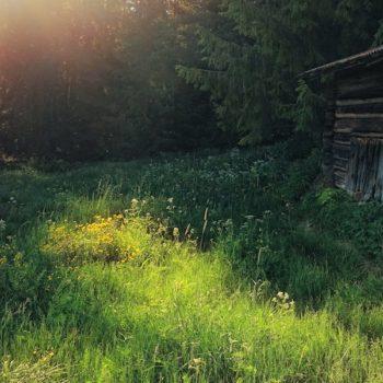 Summer evening at a random abandoned farm in Hedmark, Norway.