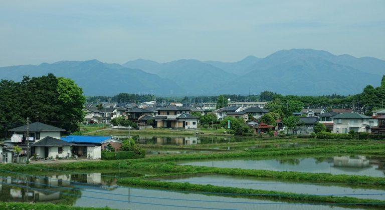 Rice fields on northern Honshu, seen from the train to Hokkaido.