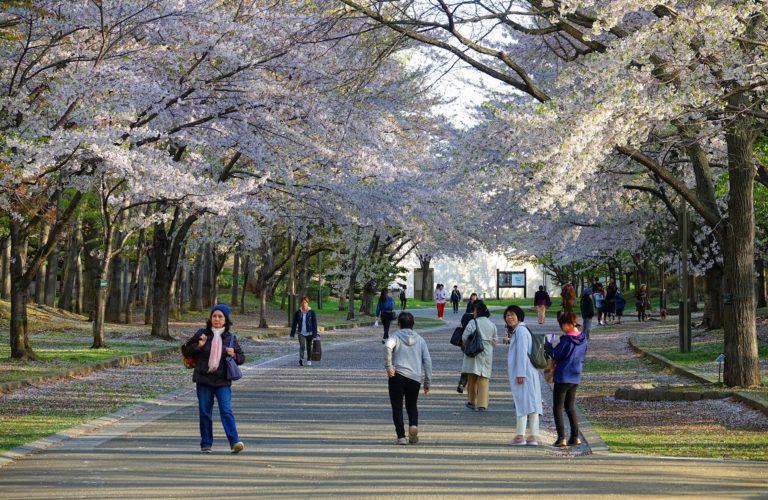 Nakajima Park in Sapporo, Japan, during sakura season.