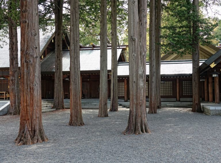 Large trees at the Mikado Shrine in Sapporo, Japan.