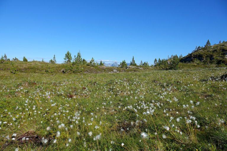 Crossing a mini marsh to climb a mini mountain. Hiking on islands is like hiking for ants.