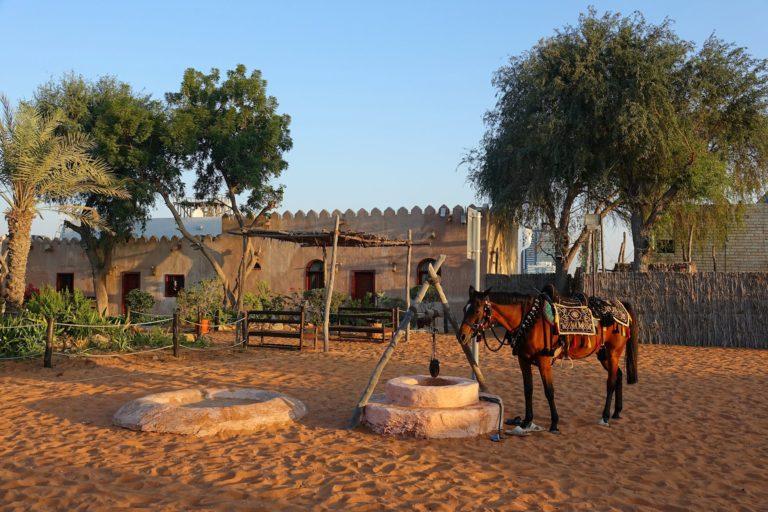 Arabian horse in Abu Dhabi.