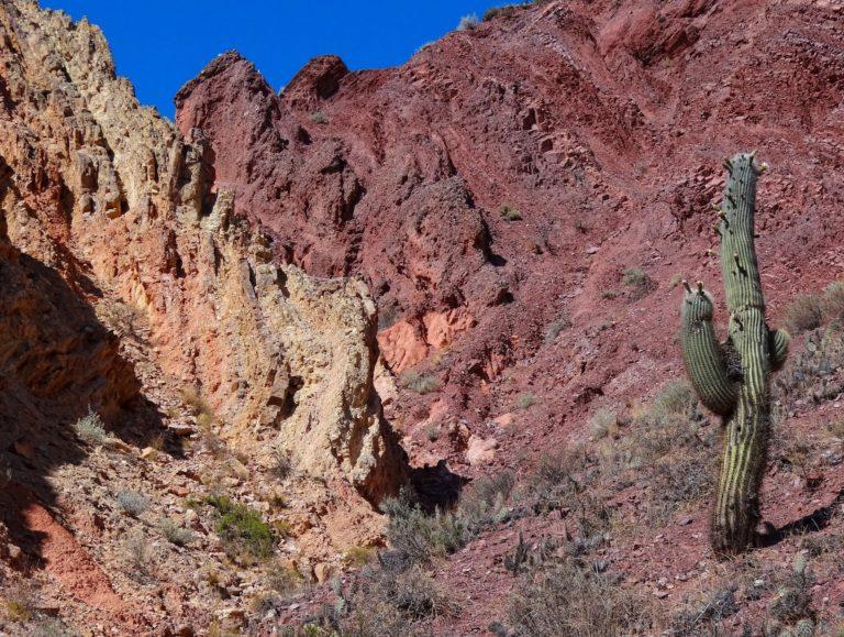 Cactus in delicious surroundings in Quebrada Humahuaca.