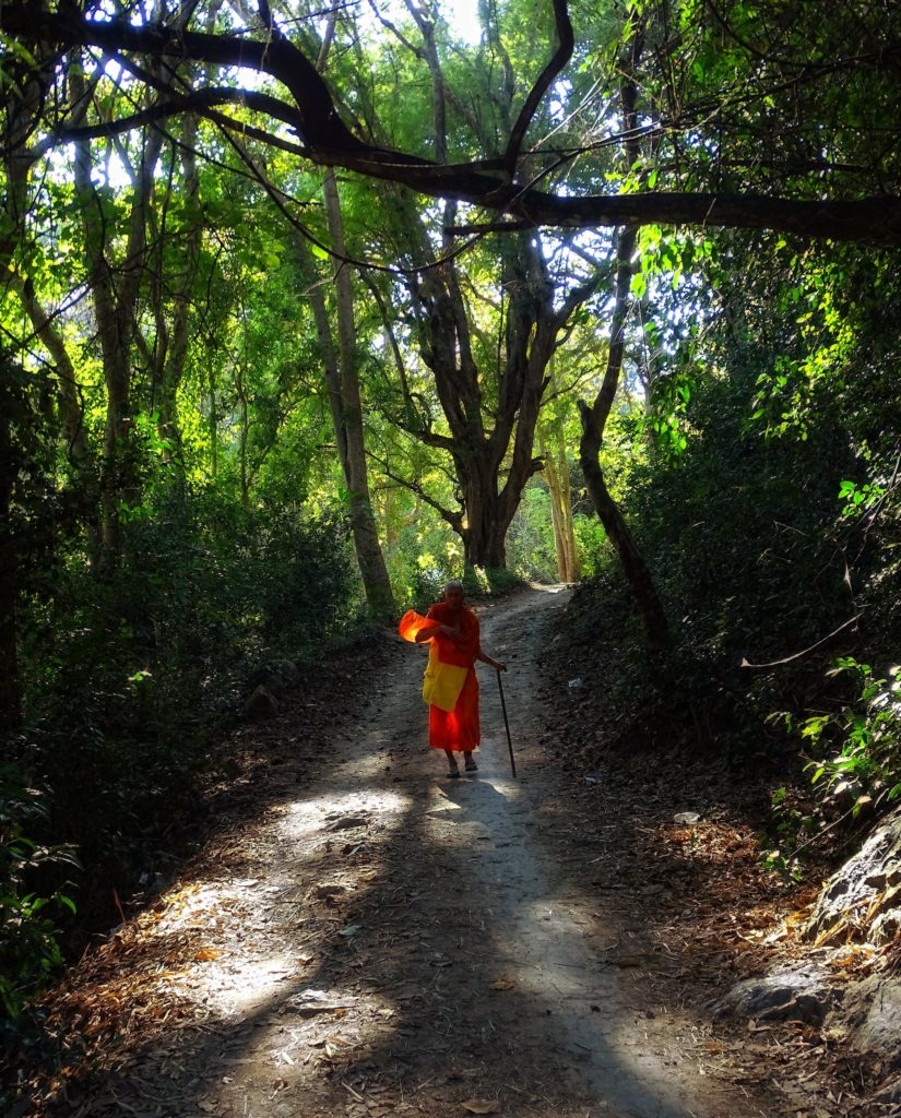 Photo of Buddhist monk in the jungle