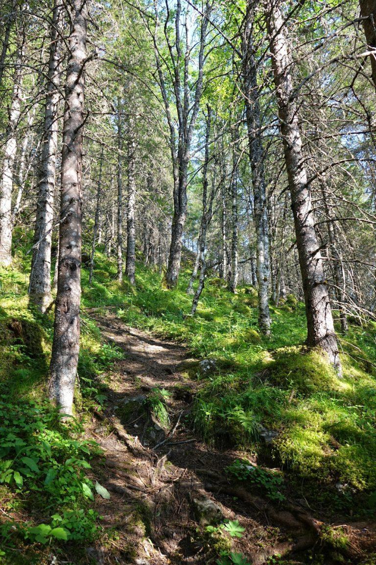 Forest in Lomsdal-Visten National Park.
