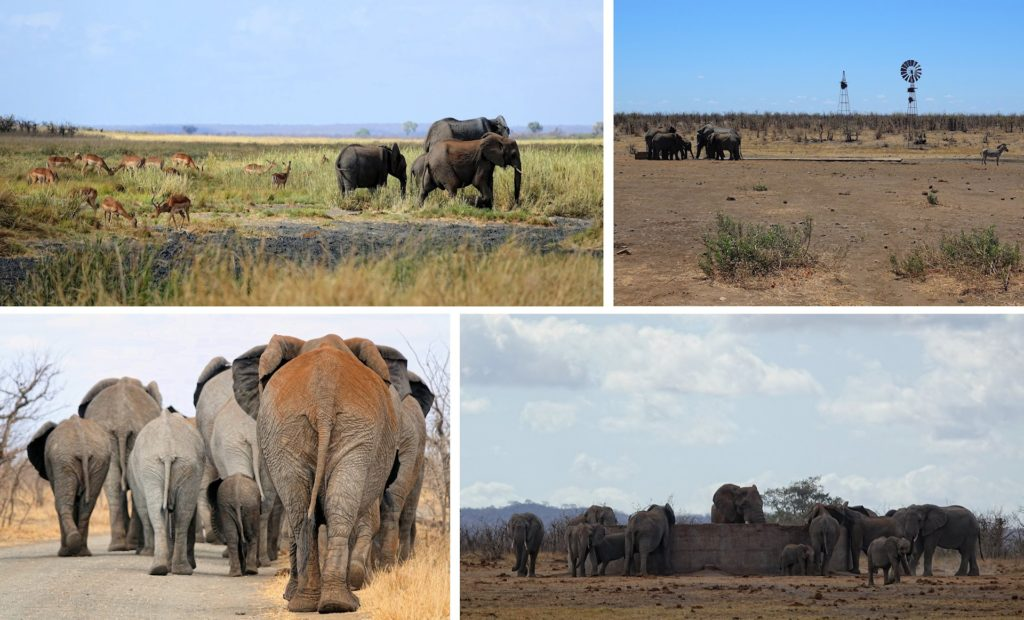 Photos of elephant encounters in Kruger Park, South Africa.