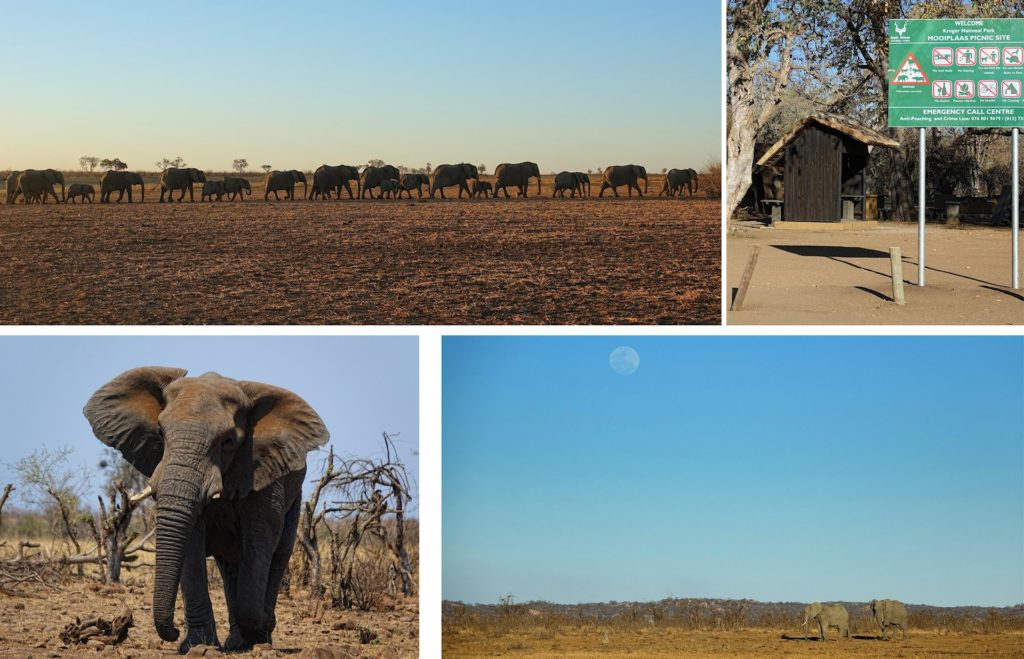 Photos of elephant life in Kruger Park, South Africa.