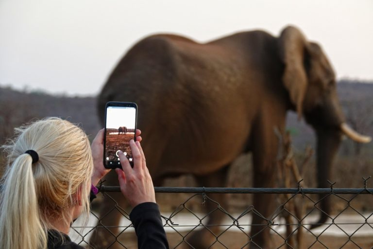 Photo of photographing an elephant at the Punda Maria hide.