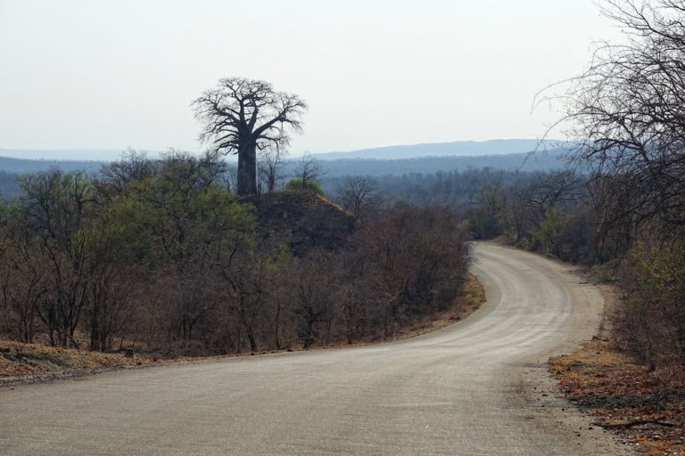 Photo of Baobab Hill on the road through northern Kruger Park, South Africa.
