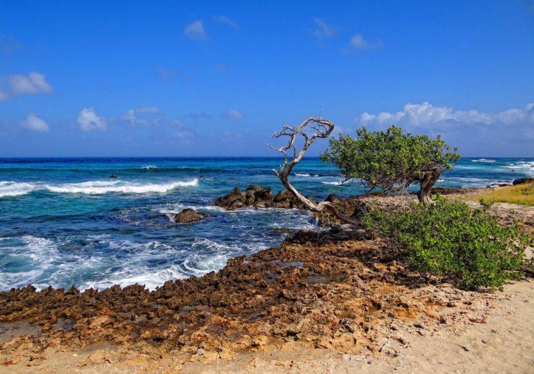 Photo of rocky beach on Aruba.