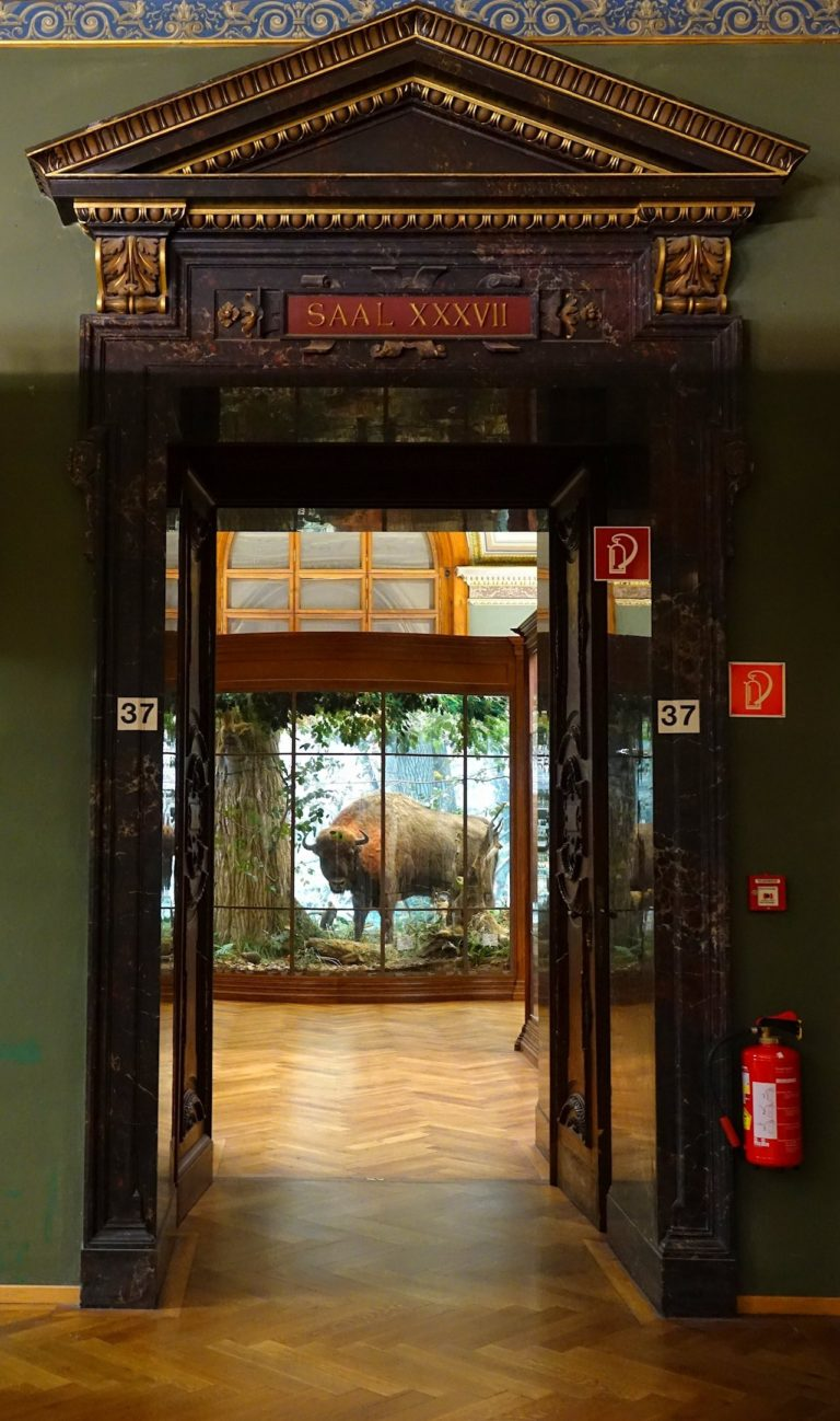 Photo of Hall 37 in the Museum of Natural History, Vienna, Austria.