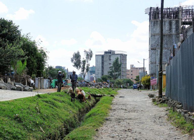Photo of man herding animals in central Addis Ababa, Ethiopia