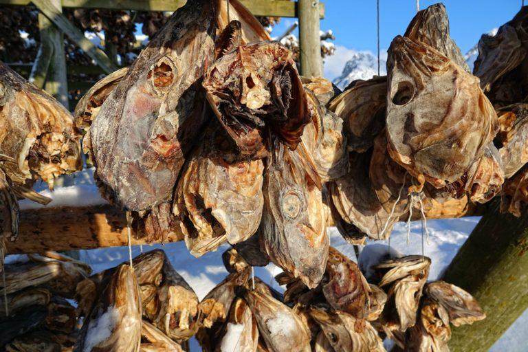 Photo of dried cod heads in Lofoten, Norway