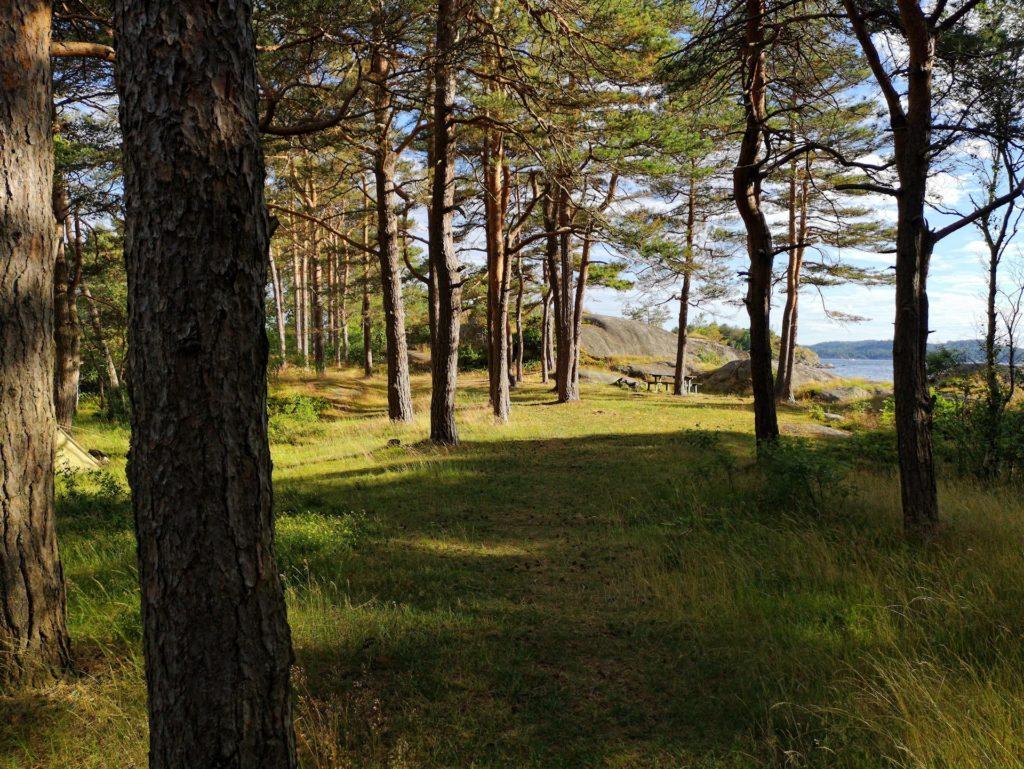 Photo of forest on Buerøya.