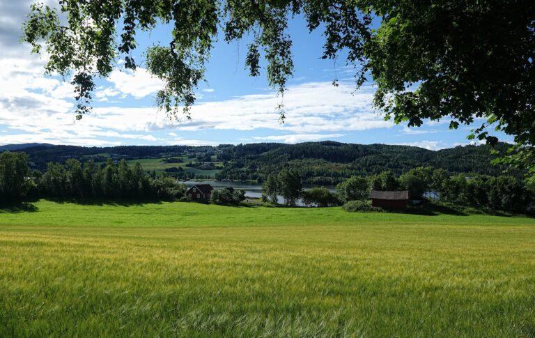 Photo of summer fields in Kjørkjetangen, Nes, Norway.