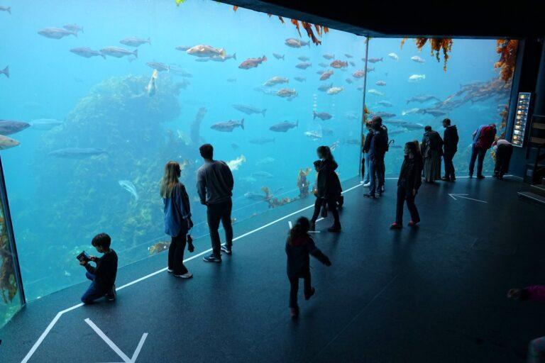 Photo of aquarium in Ålesund, Norway.
