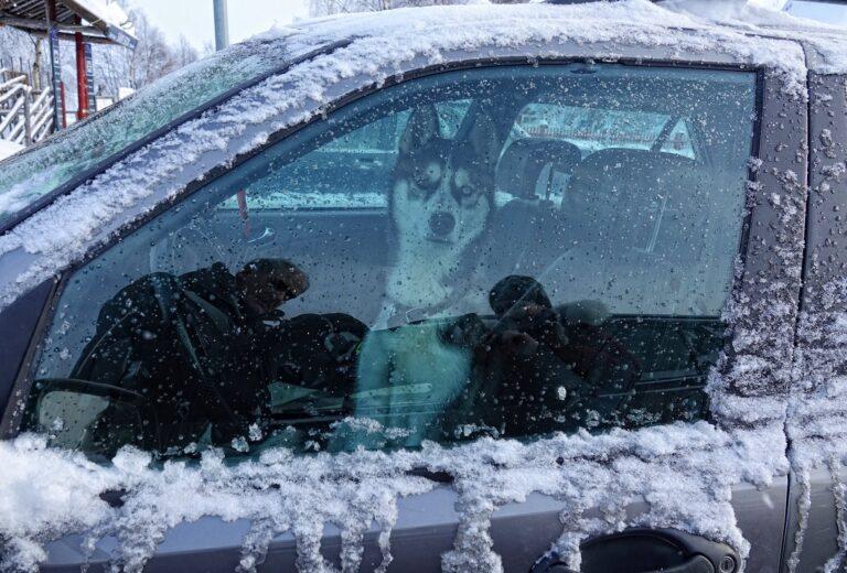 Photo of local driver in Jukkasjärvi, Sweden.