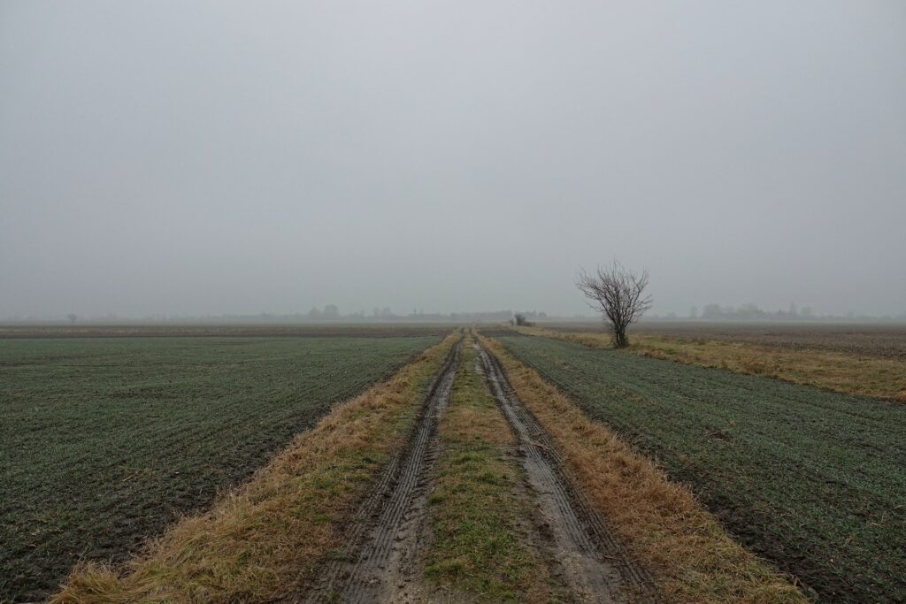 Photo of fields on the border between Hungary (left side) and Slovakia (right side).