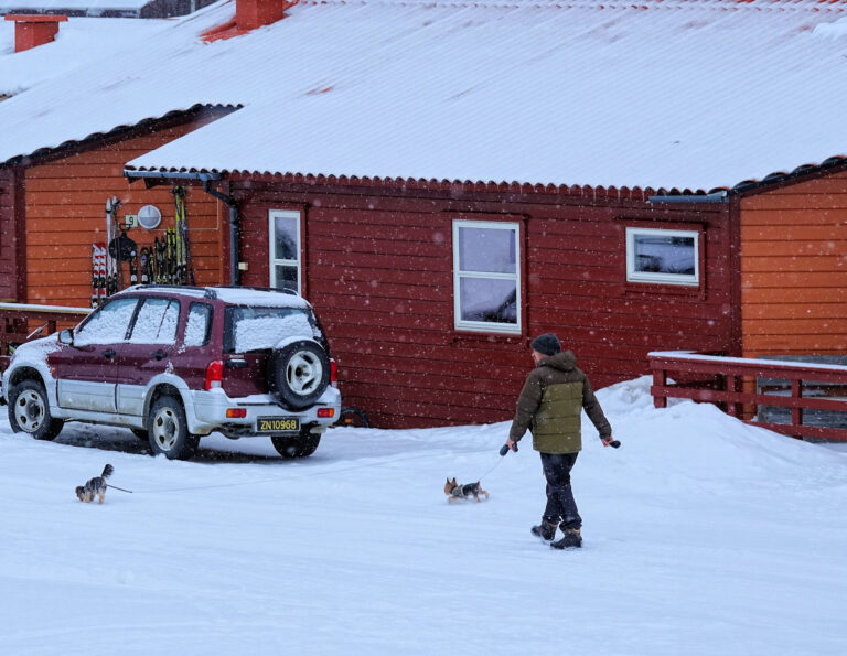 Photo of cute dogs in Longyearbyen, Svalbard, out of their element.