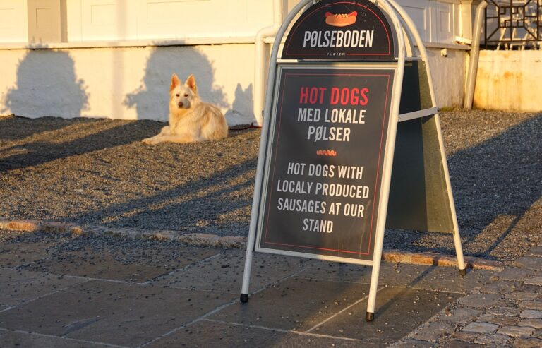 Photo of sceptical dog next to a hot dog sign.